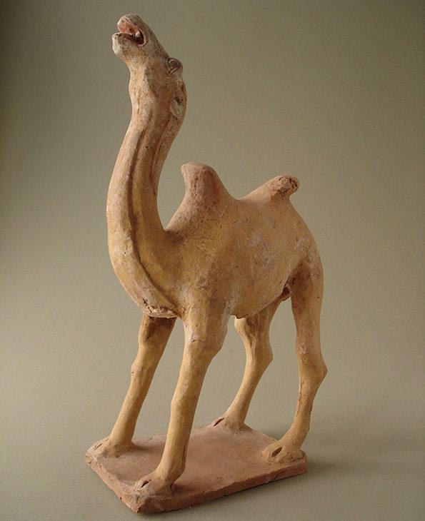 camel14