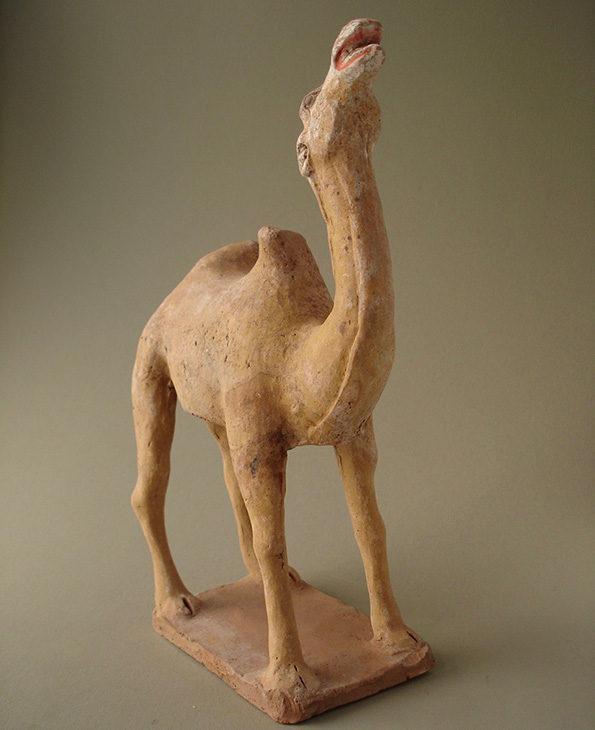 camel15