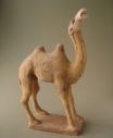 camel16