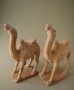 camel2