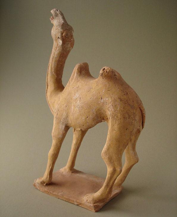 camel20