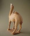 camel8